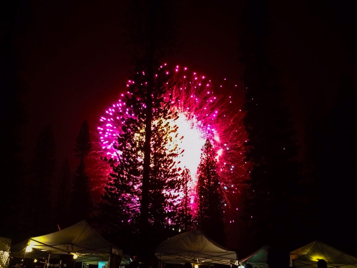 Photo of fireworks against night sky with silhouette of pine trees in Dole Park.